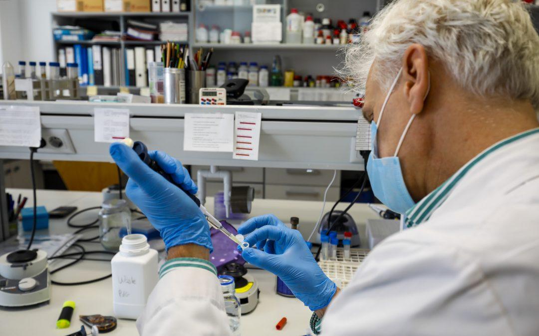 Publicados dos artículos científicos del grupo de Micología Molecular del CRIB